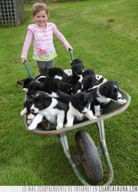 cachorros,camada,carretilla,felicidad,infancia,niña,recuerdos