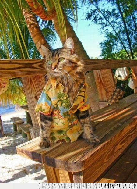 camisa,disfrutar,gato,Hawaii,playa,tropical,vacaciones