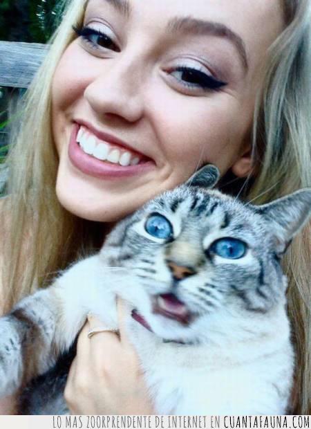 cara,expresión,gato,no le gusta,selfie