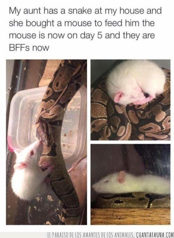 alimento,amigos,comida,ironía,rata,serpiente