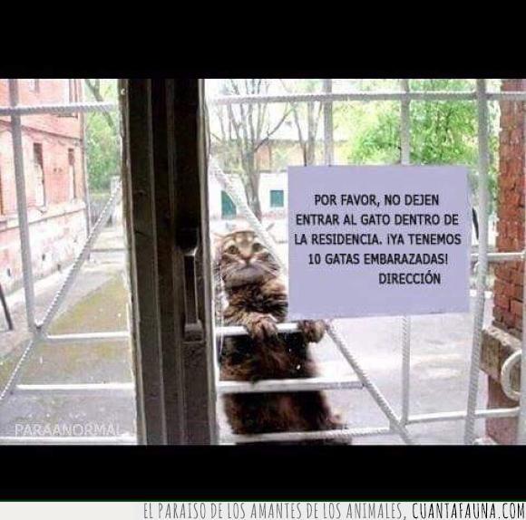 embarazada,entrar,gata,gato,Julio Iglesias,residencia
