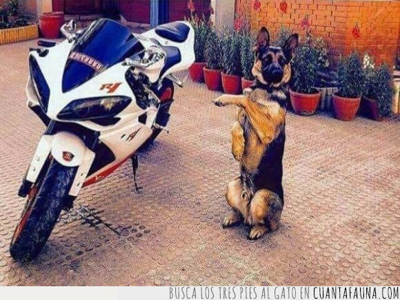 moto,pasear,perrete,perro
