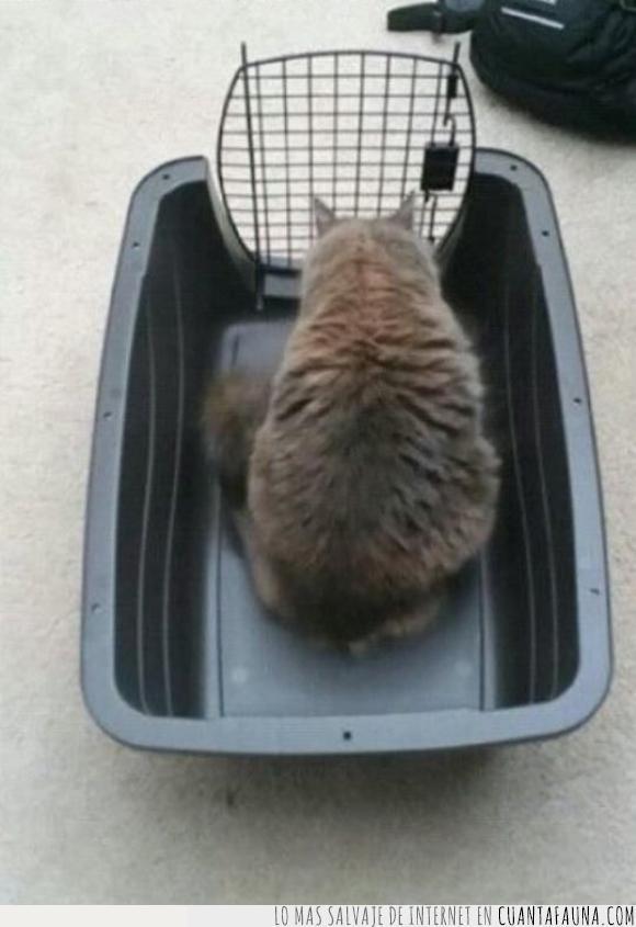 abierta,cerrado,fail,gato,jaula,wtf