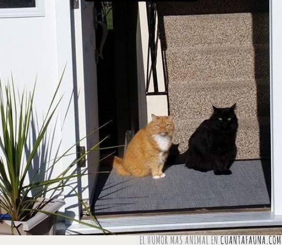 casa,gato,luz,naranja,negro,nombre,puerta,sombra