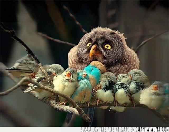 aves,búho,crías,cuidado,niñera,pequeños,pichones,ramas