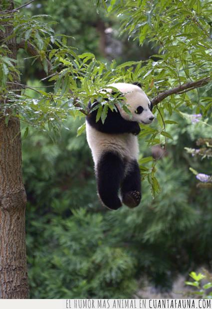 altura,árbol,distancia,espacio,medida,panda