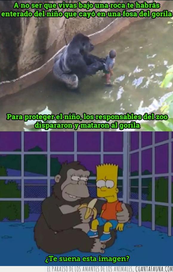 bart,gorila,niño,simpson