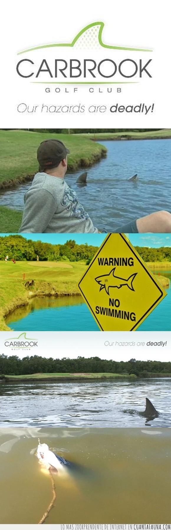 Australia,Carbrook Golf Club,golf,laguna,nadie va a por las pelotas que caen al agua,tiburón toro,tiburones