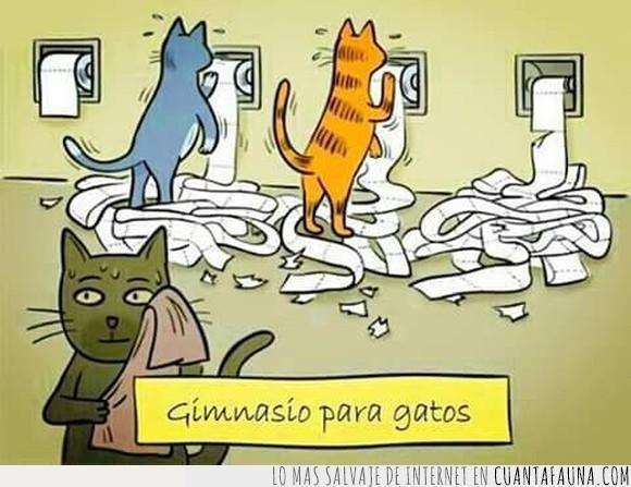 cansada,gatos,gimnasio,papel higiénico,sudor