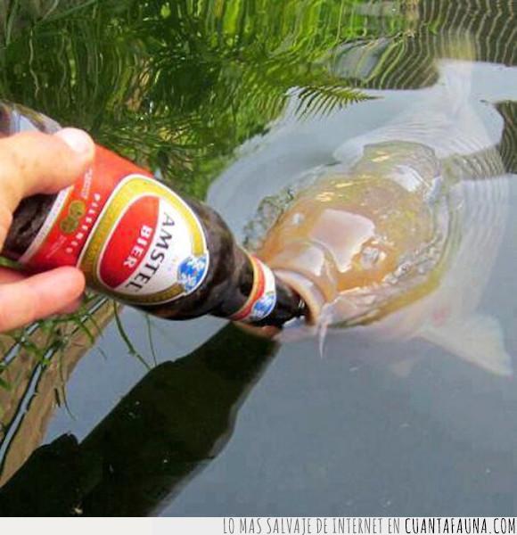 amstel,caña,cerveza,pescar,pez,tirar