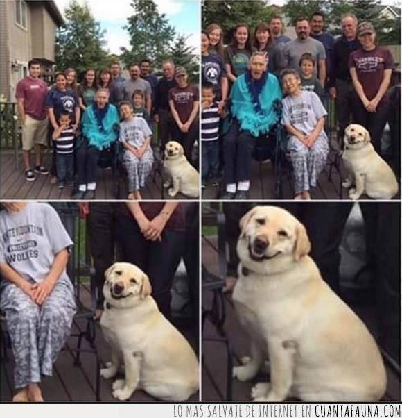 foto,fotogénico,perro,simpático