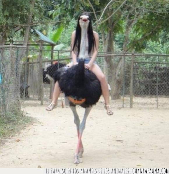 avestruz,chica,mindfu*k,montada
