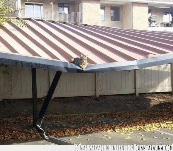 abollado,gato,gordo,peso,techo