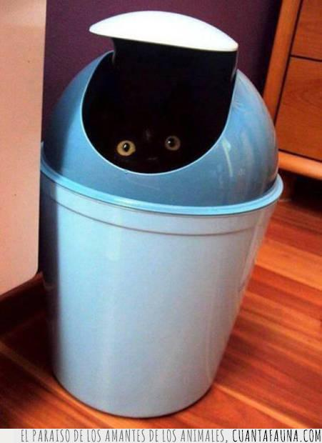 escondite,gato,negro,ojos,oscuro,papelera