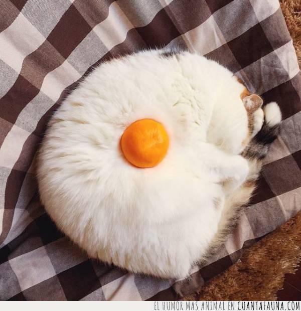 disfraz,dormido,fruta,gato,huevo,mandarina