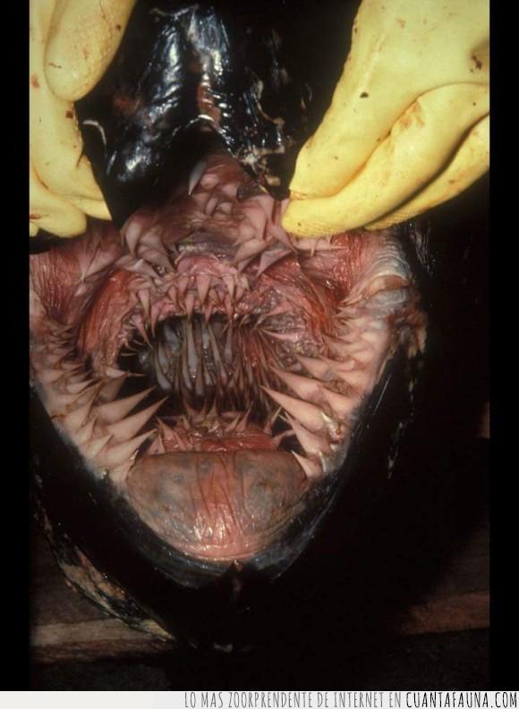 miedo,terror,tortugas,ya no son tan tiernas,¿con esa boca besas a tu madre?