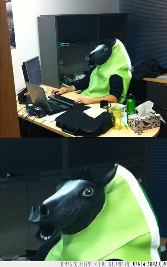 caballo,disfraz,lima,wtf