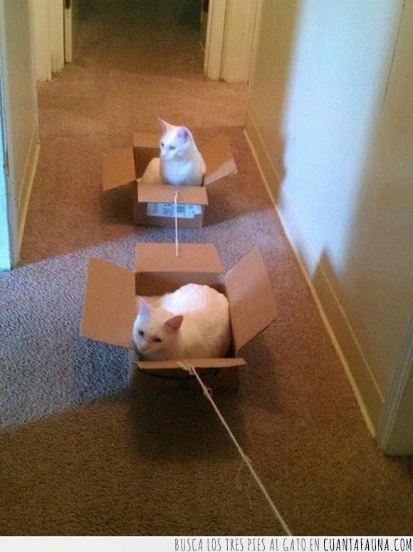 cajas,gatos,pasear,tren