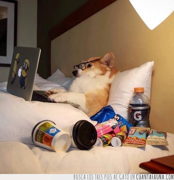amigos,facebook,fb,like,perro,quitar,unfriend