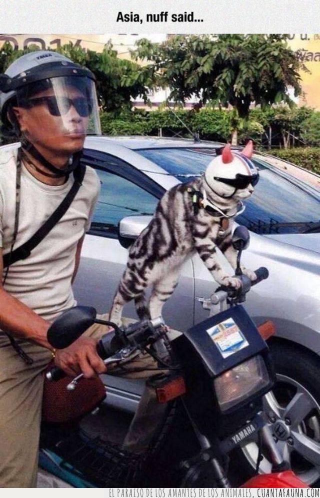 casco,estilo,gafas,gato,moto,motocicleta,protección