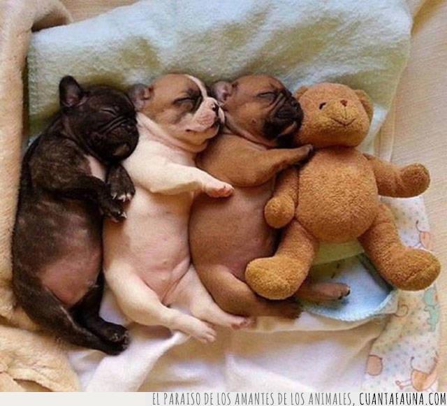 cachorros,cama,dormir,hermanos,peluche,perros