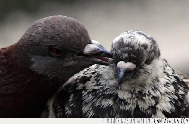 aves,dicho,oído,palomas,pico,secretos