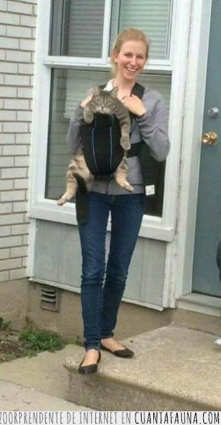 canguro,cómodo,gato,llevar,mochila,mujer,qué dirán