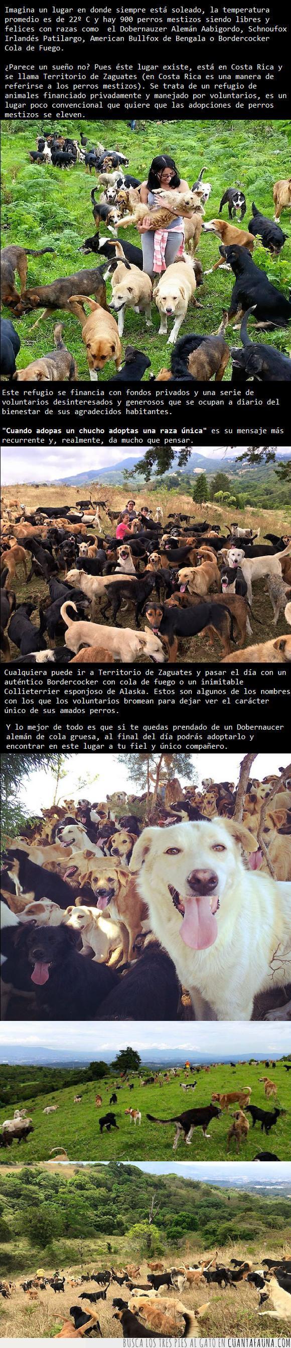 adopción,Costa Rica,mestizos,perros,refugio,santuario,territorio de zaguates