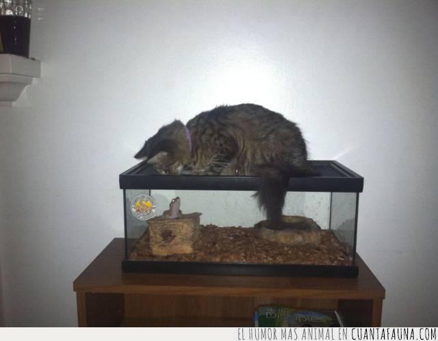 convivencia,convivir,gato,mascota,reptil,terrario