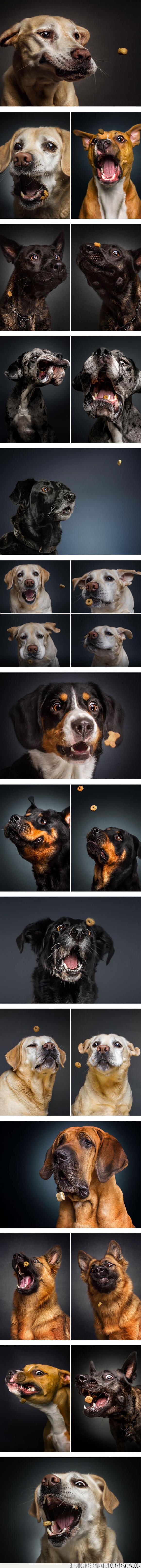 comida,fotos,perros