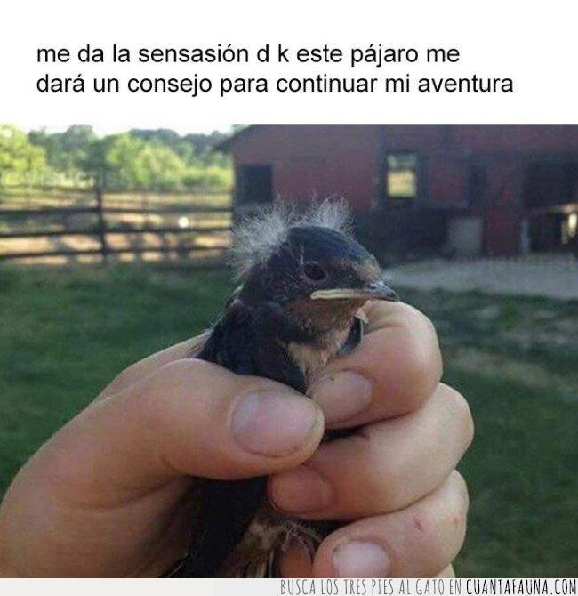 ave,aventura,pájaro,sabio