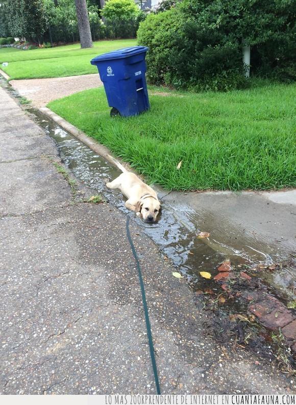 agua,cansado,charco,perro