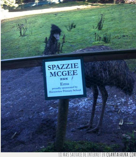 avestruz,bicho,niño,spazzie mcgee