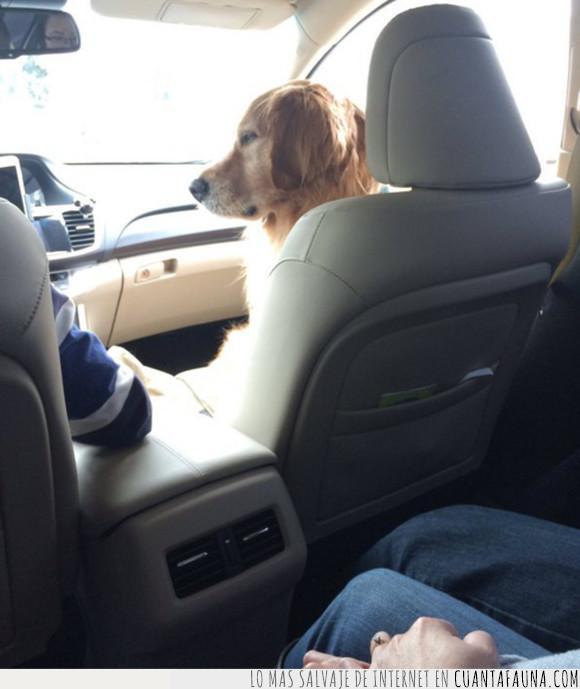 asiento delantero,perro