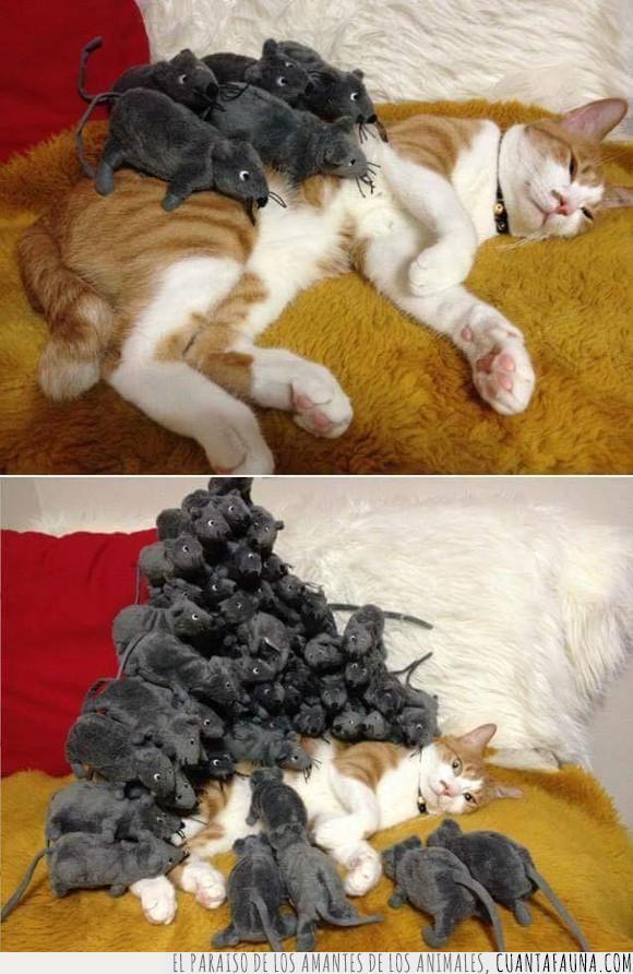 gato,ratones