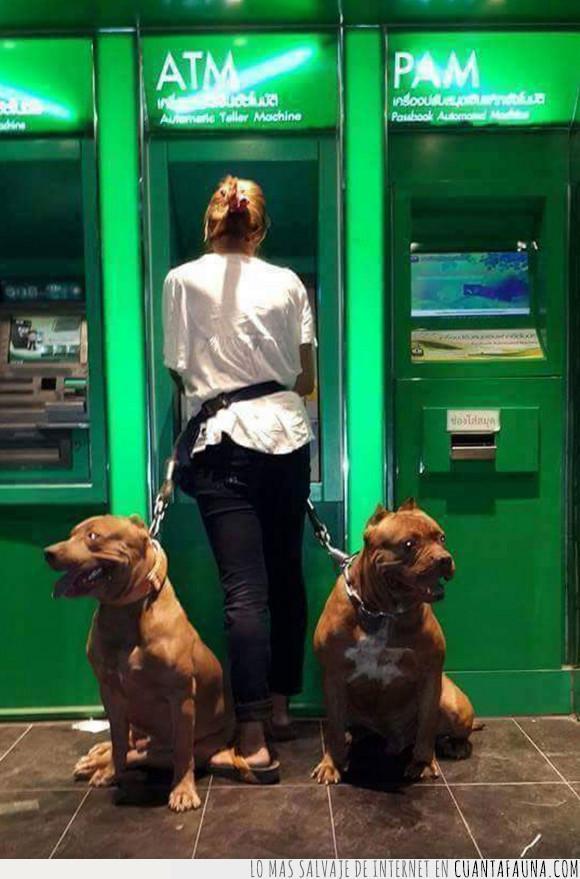cajero,guardianes,perros