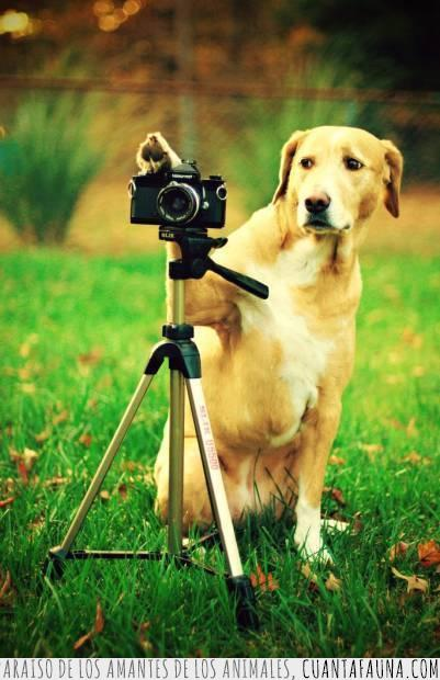 cámara,foto,perro,profesional,selfie,trípode