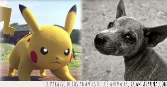 abandonar,Animales,Pena,perros,pokemon go