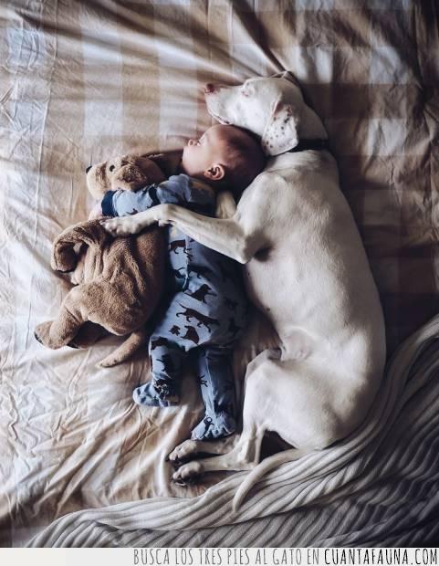 cuidar,dormir,niño,peluche,perro,protección