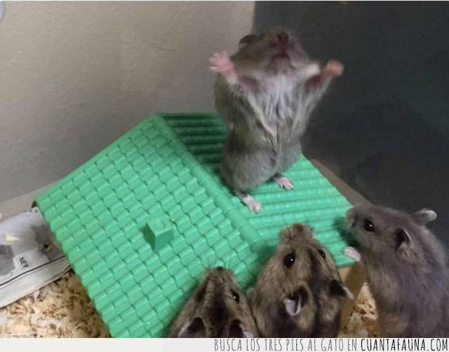 discurso,predicar,ratones