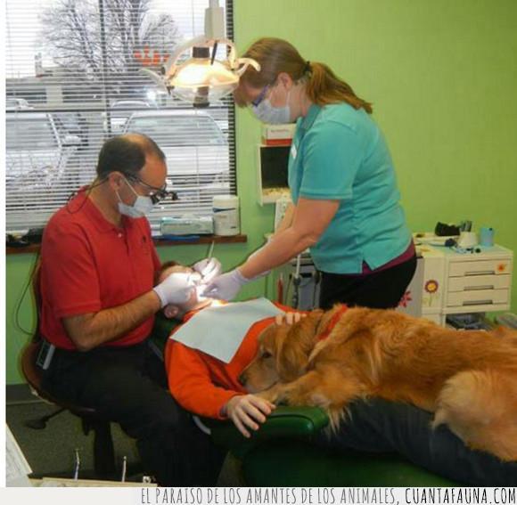apoyo,dentista,mejor amigo,perro