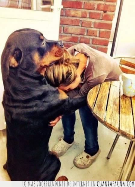 abrazo,amor,consuelo,mal día,perro
