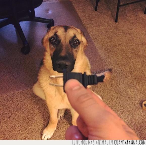 cable,enchufe,perro