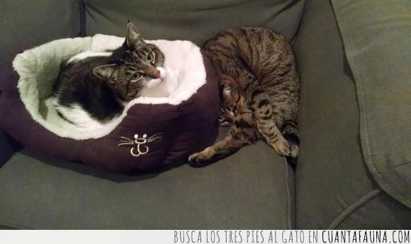 clase business,cómodo,gato,sofá