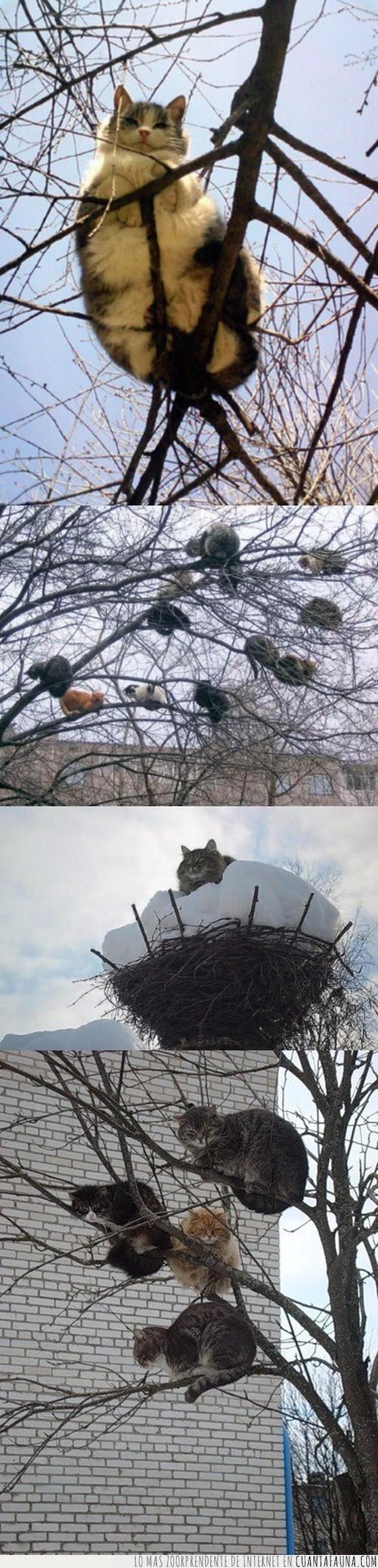 árboles,gatos,nidos