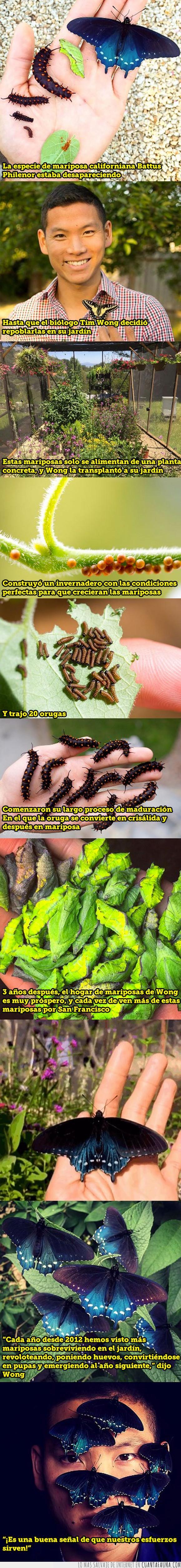 biología,mariposa,repoblar