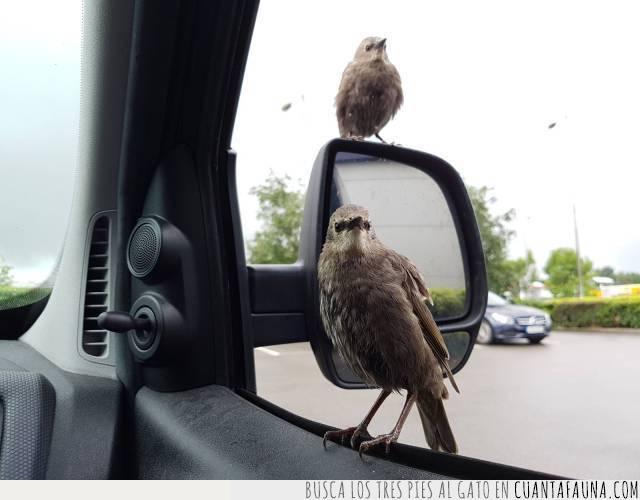 buenos días,espejo,pájaro,saludo,tráfico
