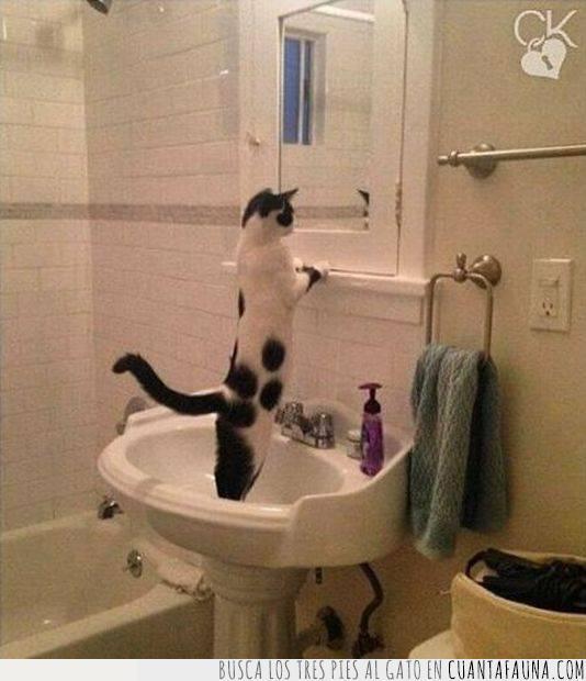 amor propio,baño,ego,espejo,gato,mirarse,narcisismo