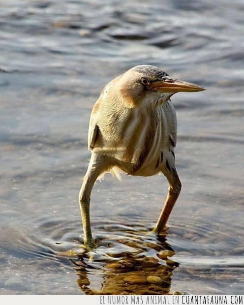 agua,frío,piernas,piscina,playa,río