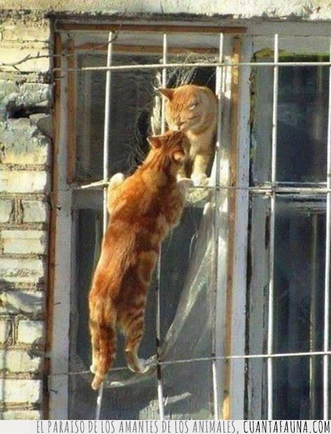 amor,beso,enamorados,gatos,Julieta,romance,romántico,Romeo,Shakespeare,ventana